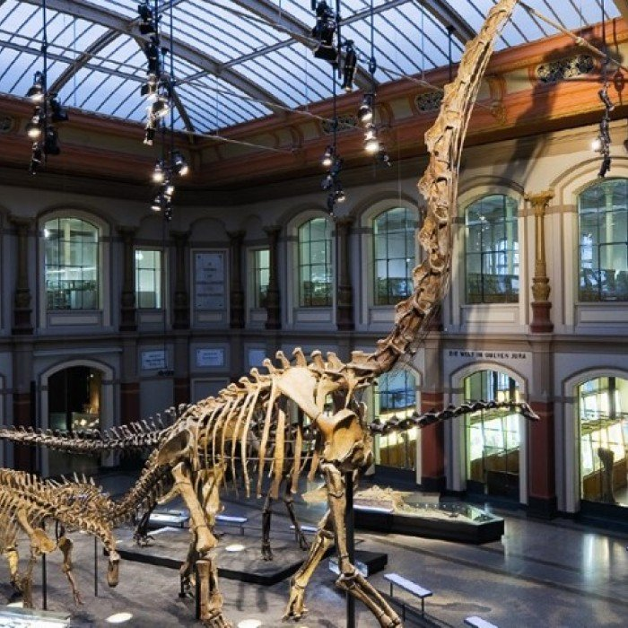 150616130211-dino-museums-museum-fur-naturkunde-berlin-super-169 (Small)